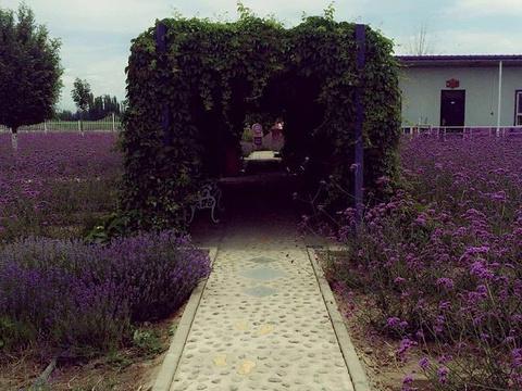 伊帕尔汗薰衣草观光园旅游景点图片