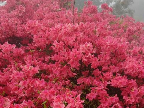 英山县天马寨风景区旅游景点图片