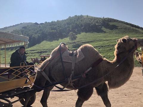 辉腾锡勒黄花沟草原旅游区旅游景点攻略图