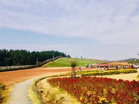 洋沙湖五彩花田旅游景点图片