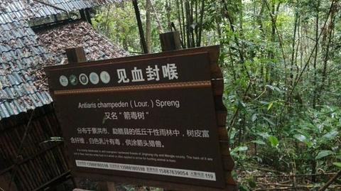 西双版纳雨林谷旅游景点攻略图