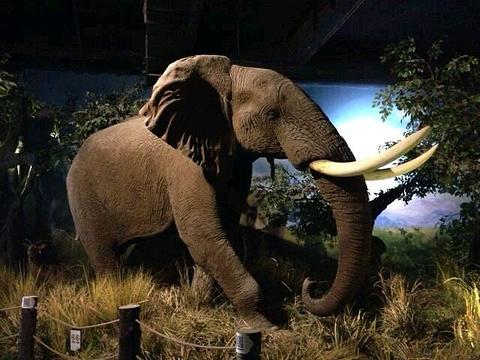 青岛滨海学院世界动物自然生态博物馆旅游景点图片