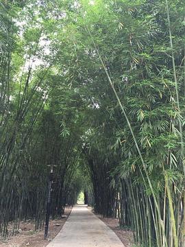 竹海大观旅游景点攻略图