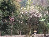杏林大观园