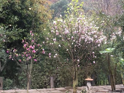 杏林大观园的图片