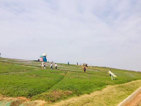 洋沙湖五彩花田旅游景点攻略图