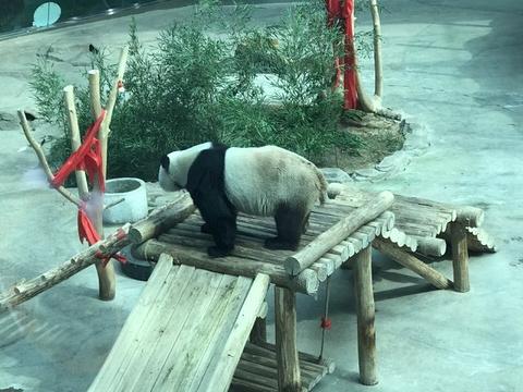 亚布力熊猫馆旅游景点图片