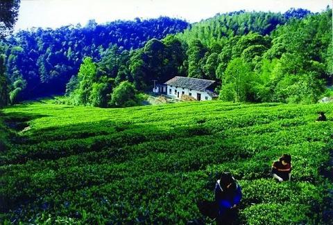 福寿山森林公园旅游景点攻略图