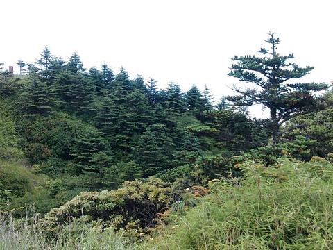 上关花景区旅游景点图片