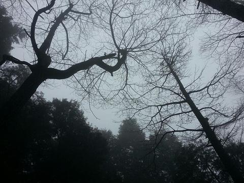 四明山国家森林公园旅游景点攻略图