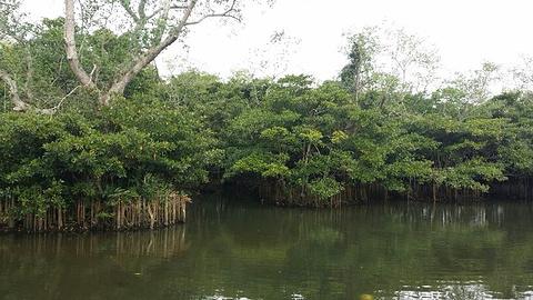 八门湾红树林旅游景点攻略图