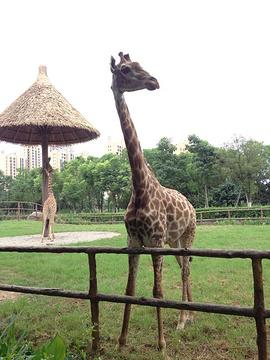 南昌动物园