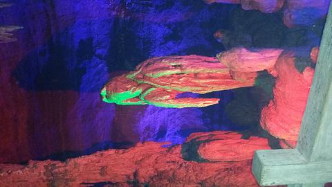 萤火虫水洞旅游景点攻略图