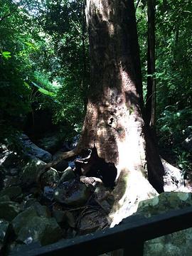 七仙岭温泉国家森林公园旅游景点攻略图