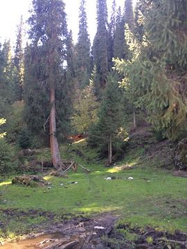 恰西森林公园旅游景点攻略图