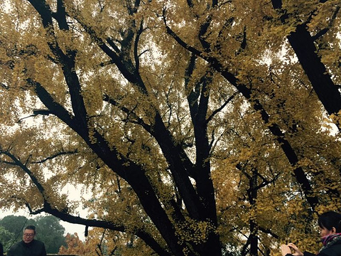 白云寺国家森林公园旅游景点图片