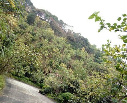 从化大金峰百花果景区旅游景点攻略图