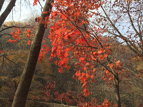 关门山国家森林公园旅游景点攻略图