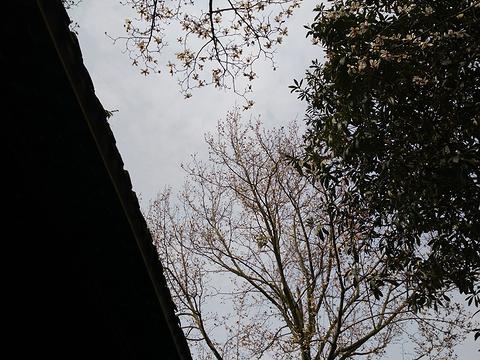 成都普罗旺斯国际薰衣草庄园旅游景点图片
