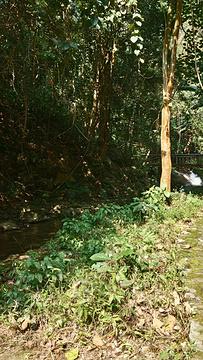 金林水乡旅游景点攻略图