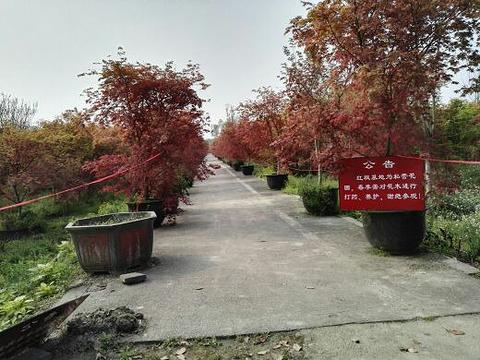 温江红枫基地