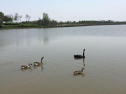 东滩湿地公园旅游景点攻略图