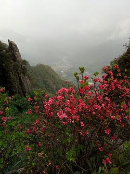 清远金子山原生态旅游风景区旅游景点攻略图