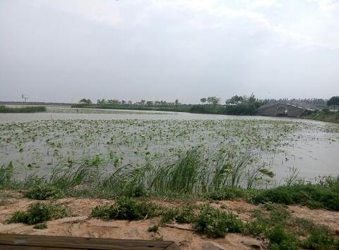 银川鸣翠湖国家湿地公园旅游景点攻略图