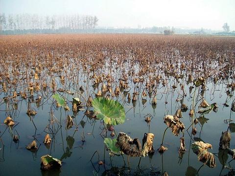 洪湖旅游景点图片