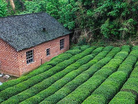 乌云山茶叶公园旅游景点图片