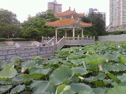 洪湖公园旅游景点图片