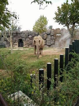 济南野生动物世界旅游景点攻略图