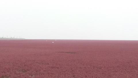 鼎翔苇海蟹滩旅游景点攻略图