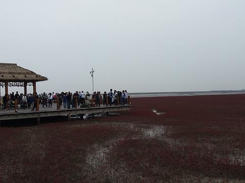 鼎翔苇海蟹滩旅游景点图片