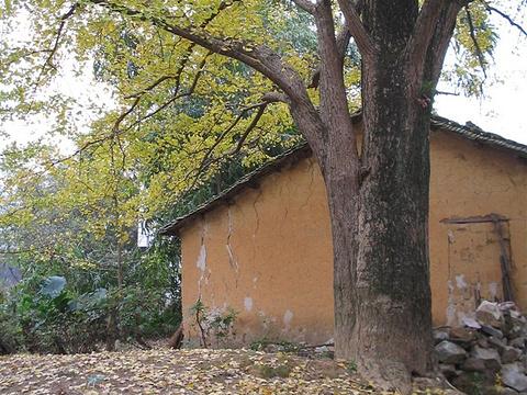 大圩古镇旅游景点图片