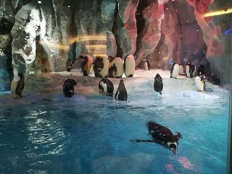 珠海长隆企鹅酒店自助餐厅旅游景点攻略图