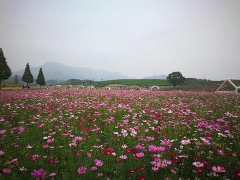 花田小镇旅游景点攻略图