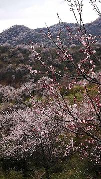 中华福寿山景区旅游景点攻略图