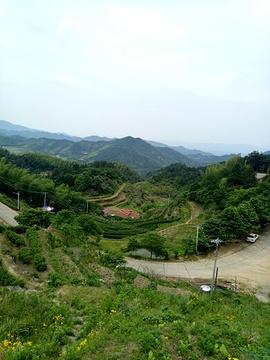 福寿山森林公园的图片