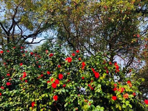 八一公园旅游景点图片