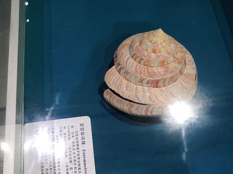 贝壳博物馆旅游景点图片