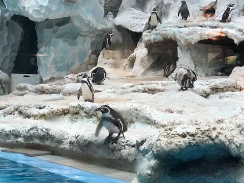 珠海长隆企鹅酒店自助餐厅旅游景点图片