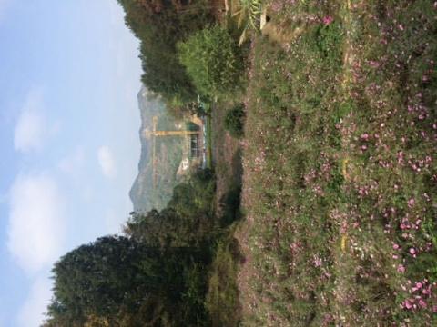 英山四季花海景区旅游景点攻略图