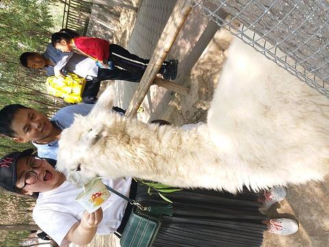 五龙山野生动物王国旅游景点攻略图