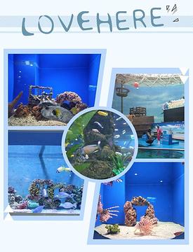 中泰海洋世界