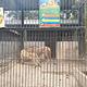 西双版纳热带动物园