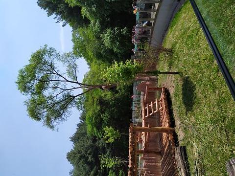 东北虎园旅游景点图片