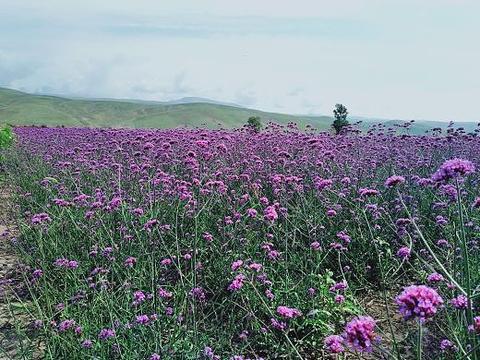 花海那拉提旅游景点图片