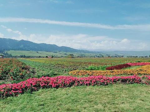 花海那拉提旅游景点攻略图