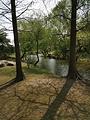 上海滨江森林公园